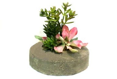 Shop for green plants & dish gardens