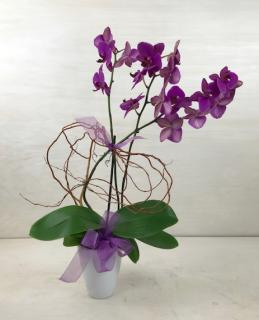 Orchid Elegance