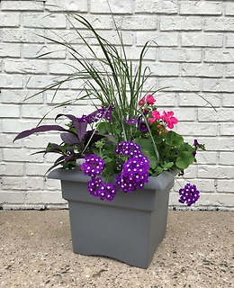 Flowering Patio Pot