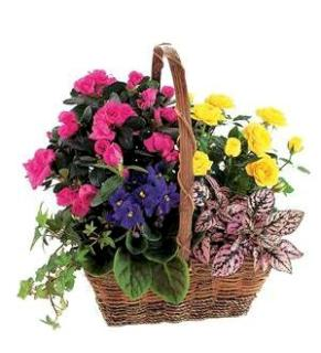 Heavenly Bloom Basket