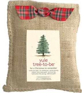 Yule Tree-To-Be