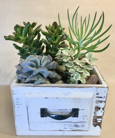 A-Drawer-Able Succulent Garden